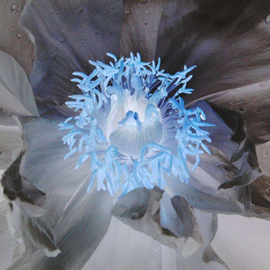 negative-of-a-flower